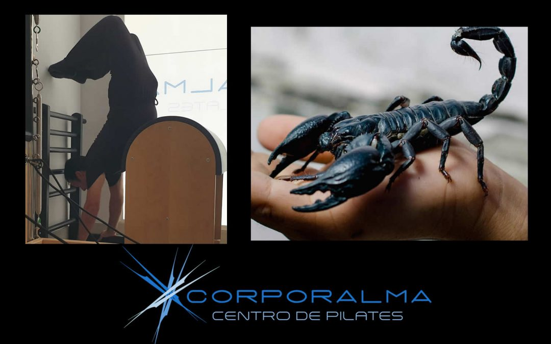 Escorpión pilatista